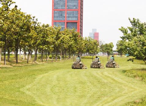 园区国宾馆东侧绿地