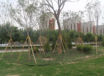 2018年中海莲湖花园市政林带改造项目